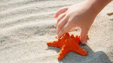Photo of Deniz Yıldızının Hikayesi