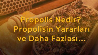 Photo of Propolis Nedir? Yararları, Kullanımları ve Daha Fazlası..